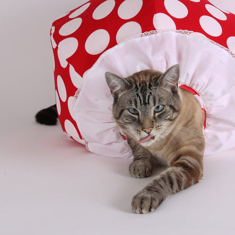 Retro, the Siamese supermodel at The Cat Ball, LLC, demonstrates the special edition Clown Cat Ball® Cat bed.