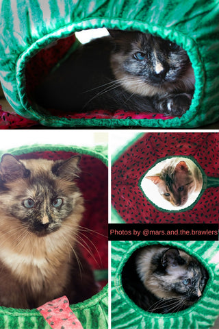 Customer photos of the watermelon Cat Ball modern cat bed taken by @mars.and.the.brawlers