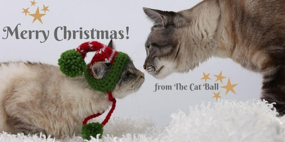 The Cat Ball holiday schedule and events