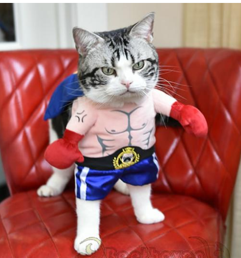 Boxer Cat Costume - Direct Dropship