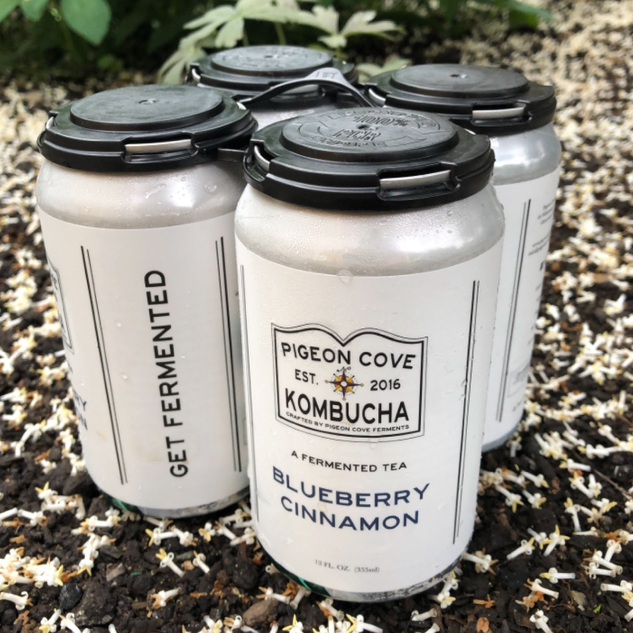 Blueberry Cinnamon Kombucha