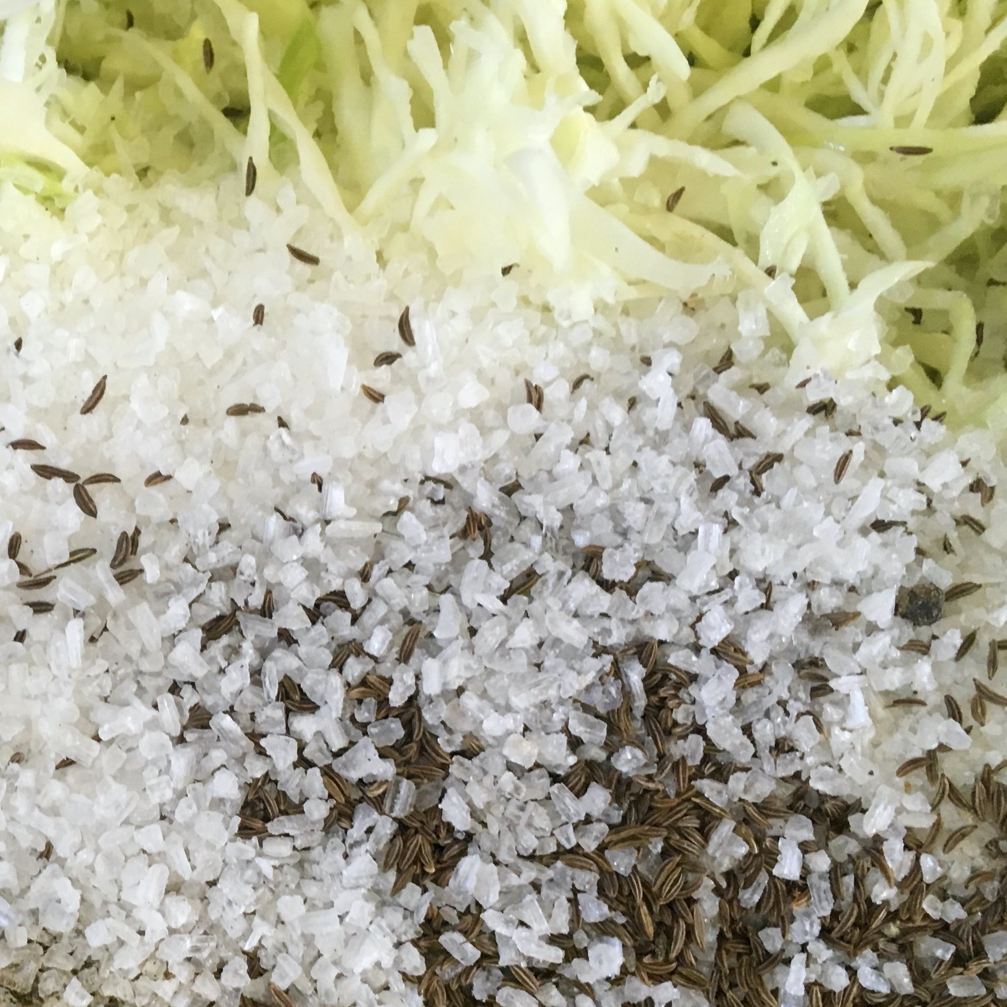 Peppered Caraway Sauerkraut Ingredients