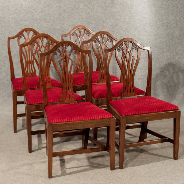 Antique Set 6 Georgian Dining Chairs Sheraton Camel-Back Quality Mahogany c1800