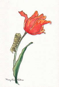 Tulip and Caterpillar