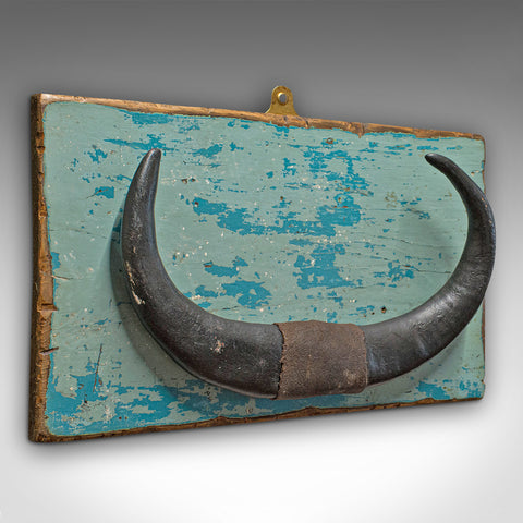 Vintage Mounted Horn, Continental, Water Buffalo Display, Mid 20th Century