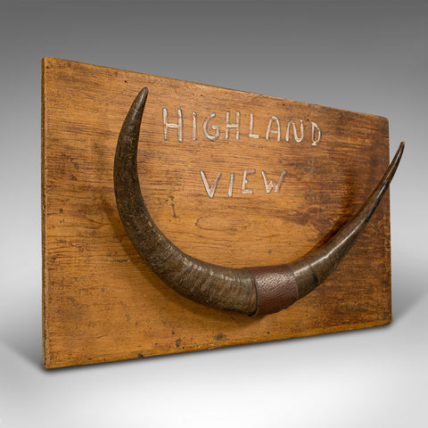 Vintage Mounted Horn Display, Scottish, Longhorn, Pine, Wall, Decorative Piece