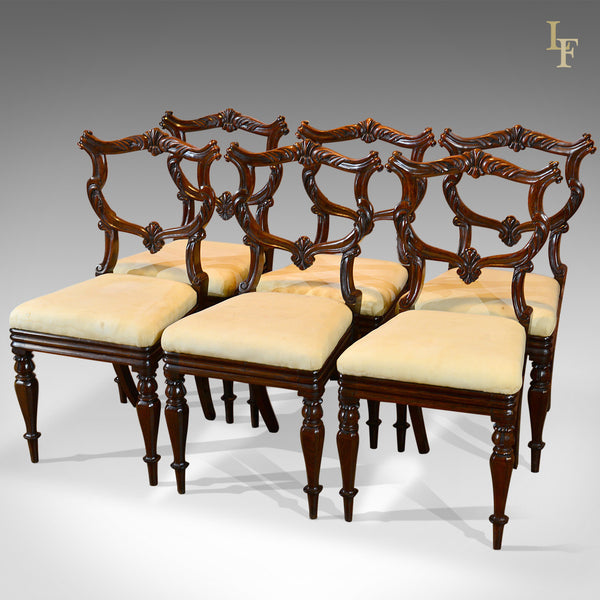 Set of Six Antique Chairs, Rosewood, William IV c.1835 - London Fine Antiques