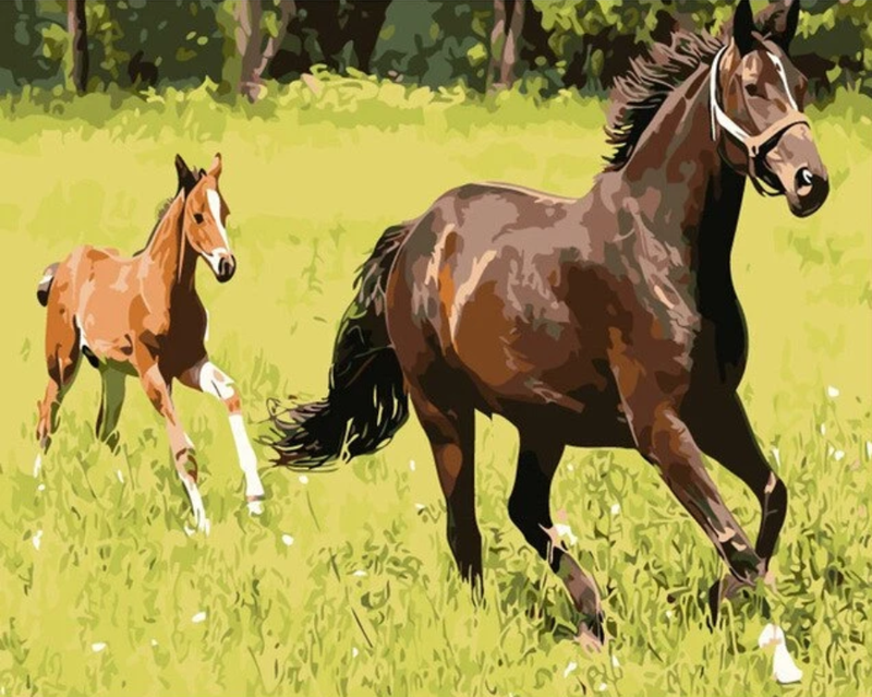 Horse Diy Paint By Numbers Kits Uk VM92374