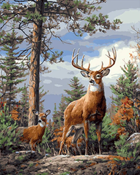 Animal Deers Look Out In The Forest Diy Paint By Numbers Kits Uk VM00096