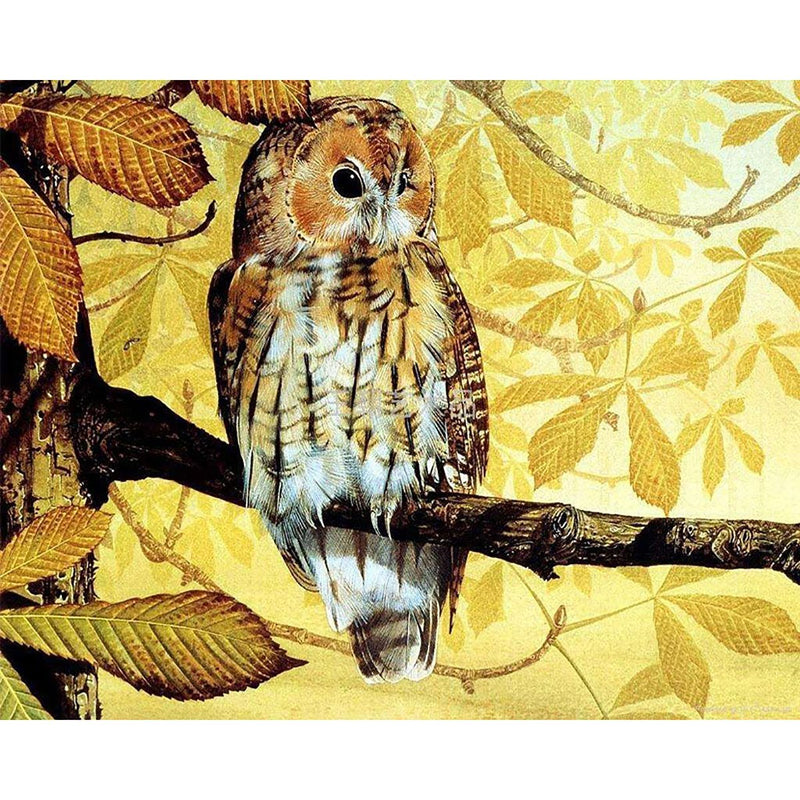 Owl Diy Paint By Numbers Kits Uk PBN91457