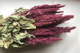 MF-90582 Dried Amaranthus Bunch - Red