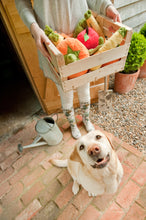 Load image into Gallery viewer, PLAY Garden Fresh - Toys - P.L.A.Y. - Shop The Paws