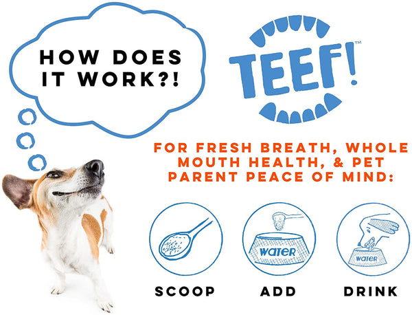 TEEF! Daily Dog Dental Care for Dogs & Cats | Supplement | TEEF - Shop The Paws
