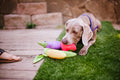 PLAY Farm Fresh - Toys - P.L.A.Y. - Shop The Paws