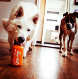 Load image into Gallery viewer, Sodapup - Orange Squeeze Can Toy - Toys - Sodapup - Shop The Paws