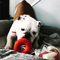 Sodapup - Life Ring Candy Rubber Chew Slow Feeder Toy | Toys | Sodapup - Shop The Paws
