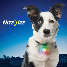 Load image into Gallery viewer, Nite Ize SpotLit Disc-O Select LED Collar Light | Accessories | Nite Ize - Shop The Paws