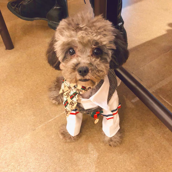 Gucci Pet Scarf