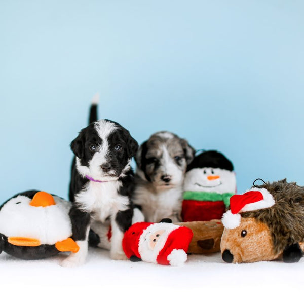 ZippyPaws Holiday Squeakie Buddies - Pack of 3 | Toys | ZippyPaws - Shop The Paws