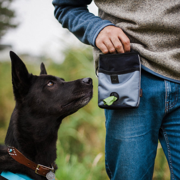 PLAY Deluxe Training Pouch | Landscape Eclipse | Accessories | P.L.A.Y. - Shop The Paws