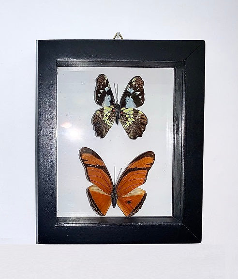 2  -  Framed Butterflies  (ID#5-2)