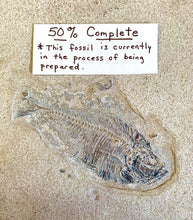 Load image into Gallery viewer, Fish Fossil Preparation  Kit