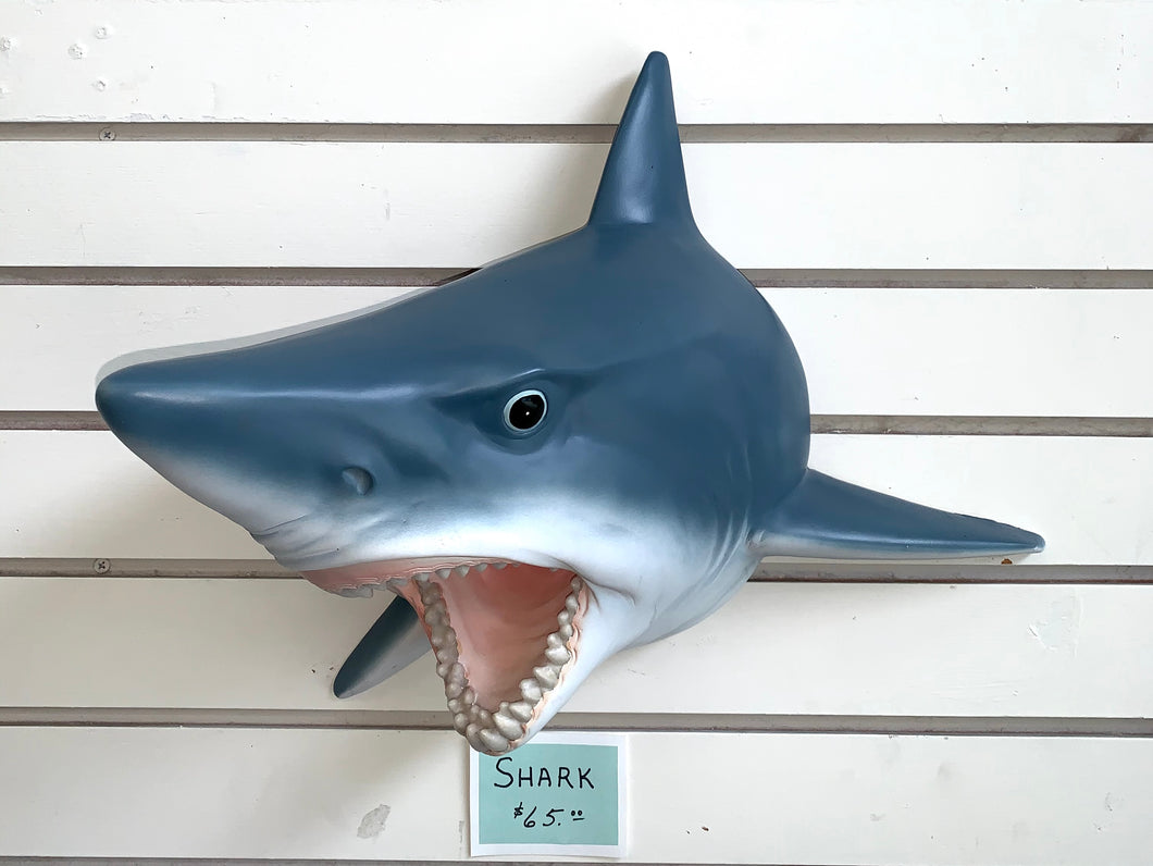 A gray shark with its mouth open.