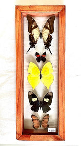 5 - Framed Butterflies