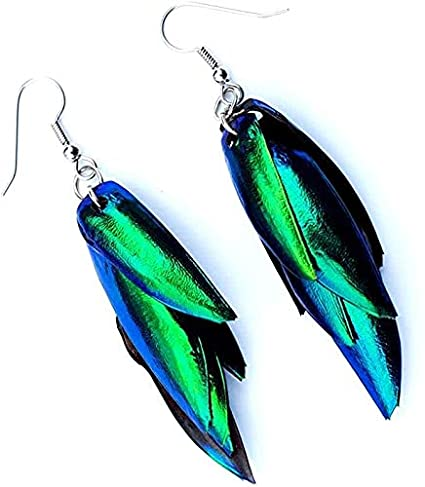 Silver earring hooks with multilayered iridescent beetle wings.
