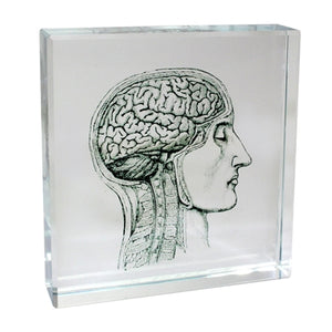 A square glass paperweight with a diagram of a brain in black.