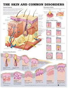 "Poster labelled ""The Skin and Common DIsorders"" with multiple diagrams."