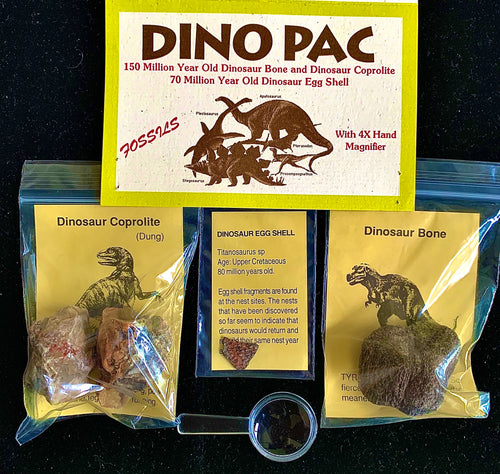 Three plastic bags containing dinosaur fossils. A small magnifying glass is at the bottom of the image. The paper label of the bags reads