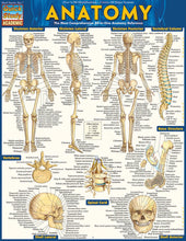 "Load image into Gallery viewer, A chart labelled ""Anatomy"" in yellow letters on blue. It shows multiple skeletal diagrams."