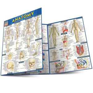 A trifold anatomy chart, partially folded over.