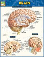 "Load image into Gallery viewer, A chart labelled ""Brain"" in yellow on a blue background. It has multiple labelled diagrams."