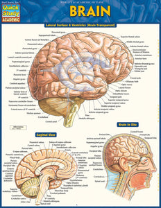 "A chart labelled ""Brain"" in yellow on a blue background. It has multiple labelled diagrams."