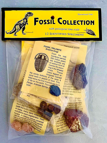 A plastic bag containing multiple fossils, individually packages with identification sheets.