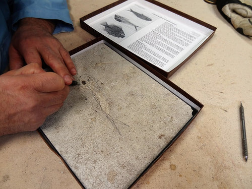 An open fish fossil kit, with a person carefully chiselling away at the top layer.