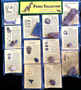 Fossil Collection Kit with Geologic Time Scale