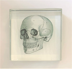 A glass paperweight with a diagram of a skull.