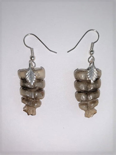 Rattles from a rattlesnake on silver earring wires, attached by a pieces with a silver leaf motif.