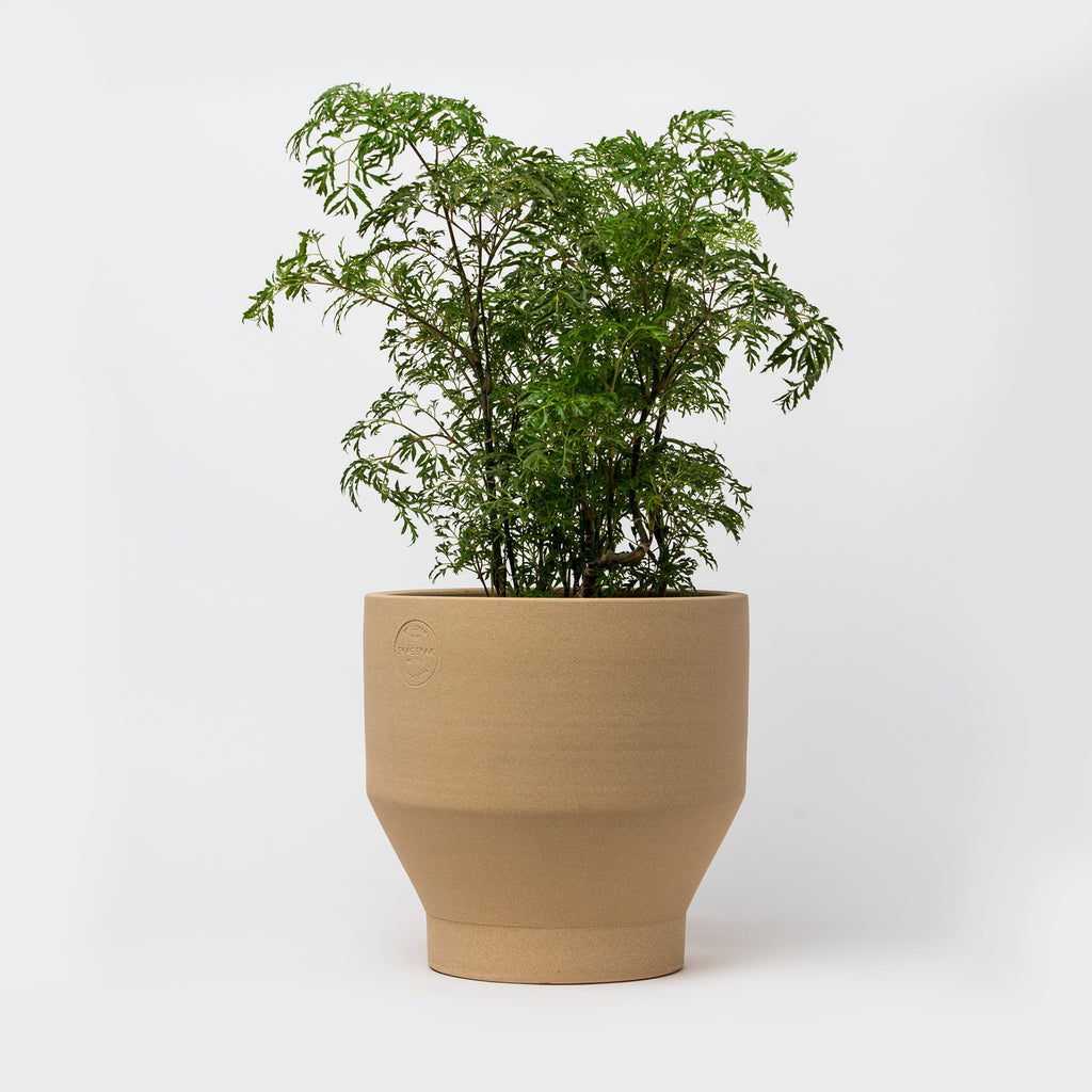 Edge Pot, indoor