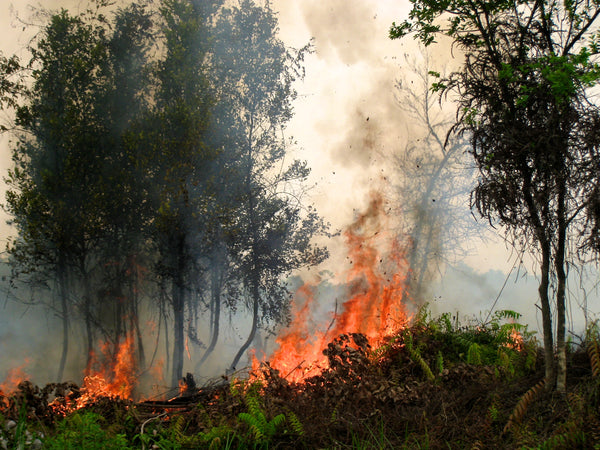 Fires in Indonesia by CIFOR