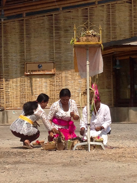 Balinese ceremony at the Big Tree Farms Chocolate Factory in Bali