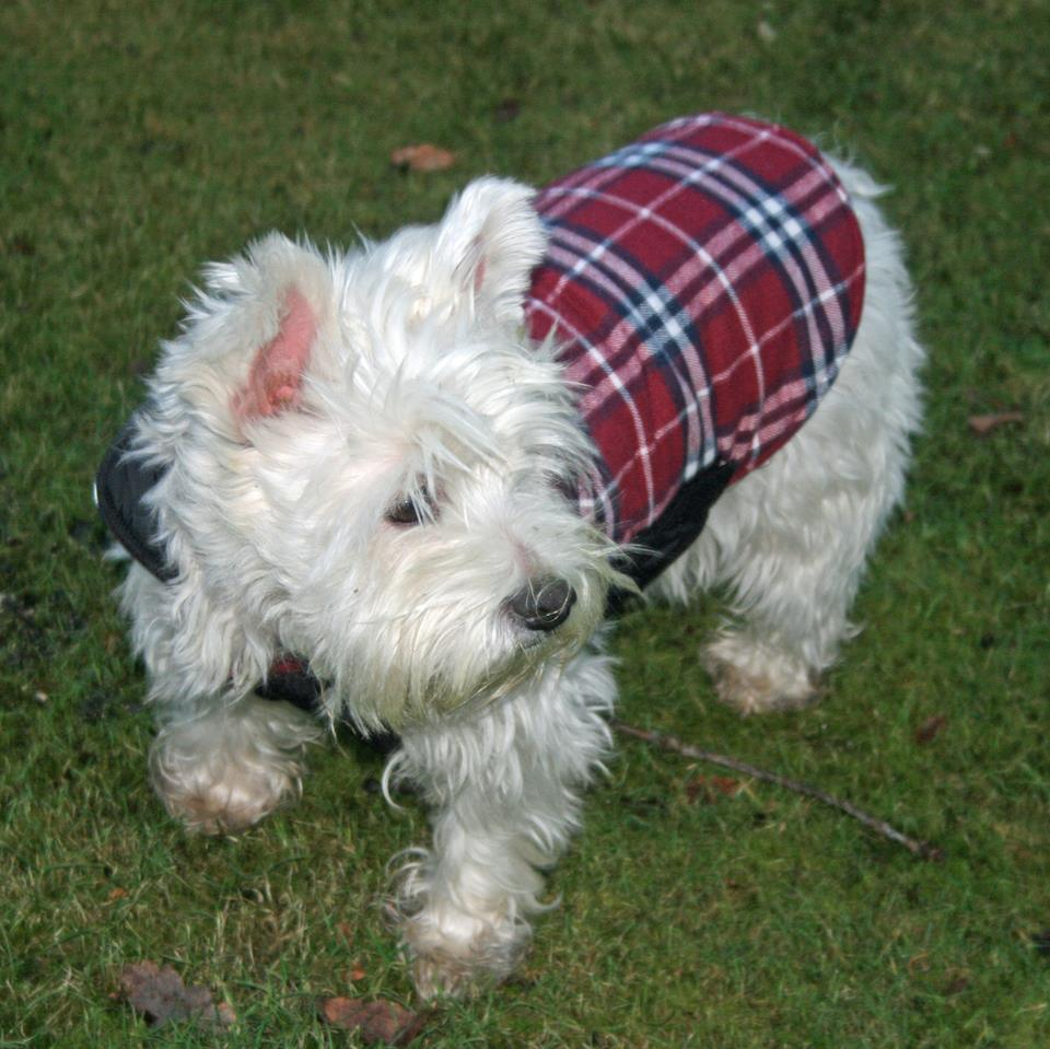 At The Westies Shop you can get Westie Gifts for Westie Lovers