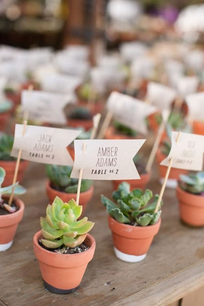 These succulent escort cards are not only great for showing guests where they should be seated, they're good as wedding favors, too.