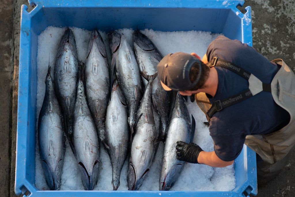 day boat tuna tre fin, local seafood, seattle fish, seafood delivery
