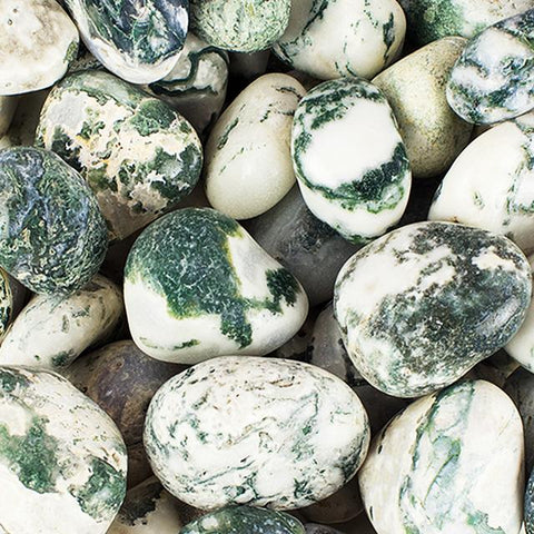 Tree Agate Tumbled Stone - 1 Piece
