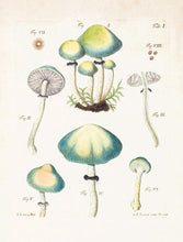 Load image into Gallery viewer, Mushroom Postcards