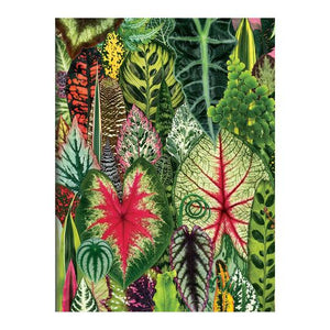 Houseplant Jungle Greeting Assortment Notecards